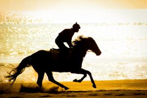 スピード指数と馬場適性指数よりの推奨馬